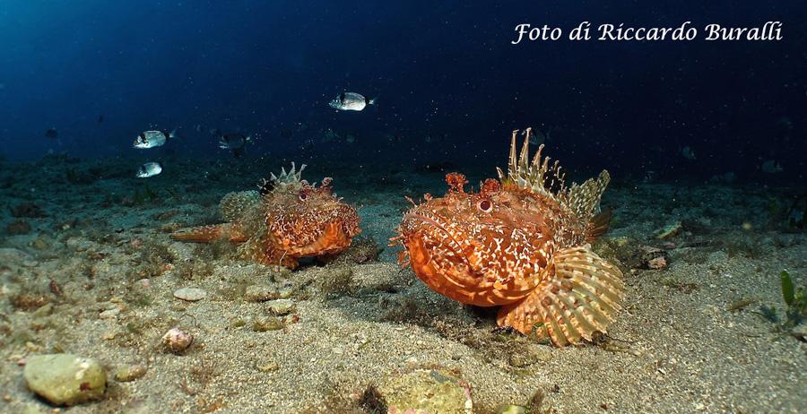 Wonderful seabed of Elba Island