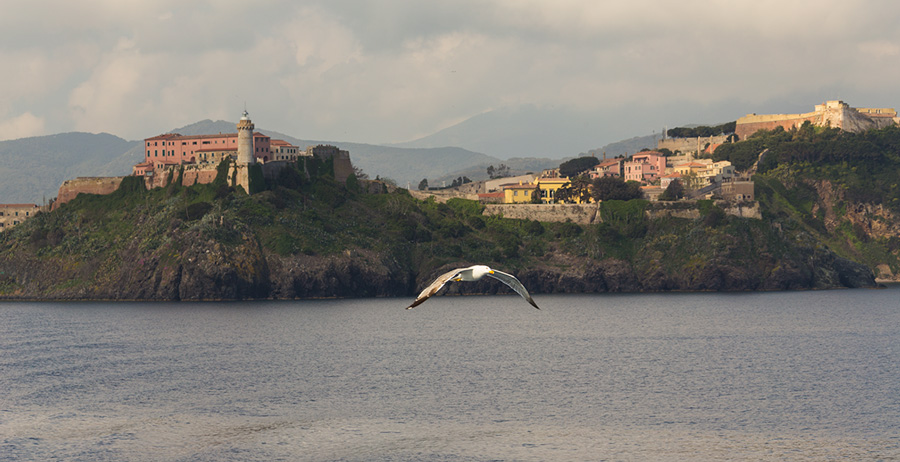 Portoferraio Elba Island - seagull in flight on white lighthouse of the fortress