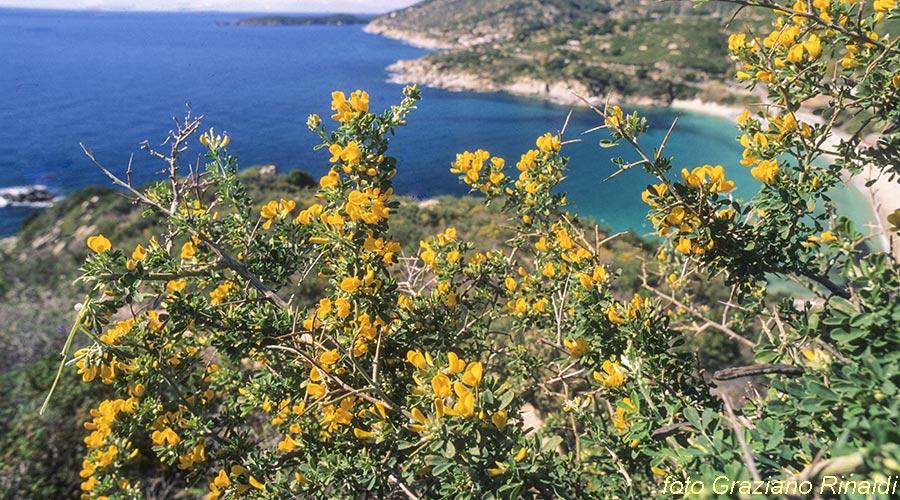 Elba Island, Flowers, Sea, Mediterranea, story