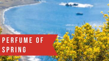 Elba Island, flowers, brooms, mediterranean