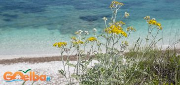 elba island, sea, flowers, nature, hiking, discovering