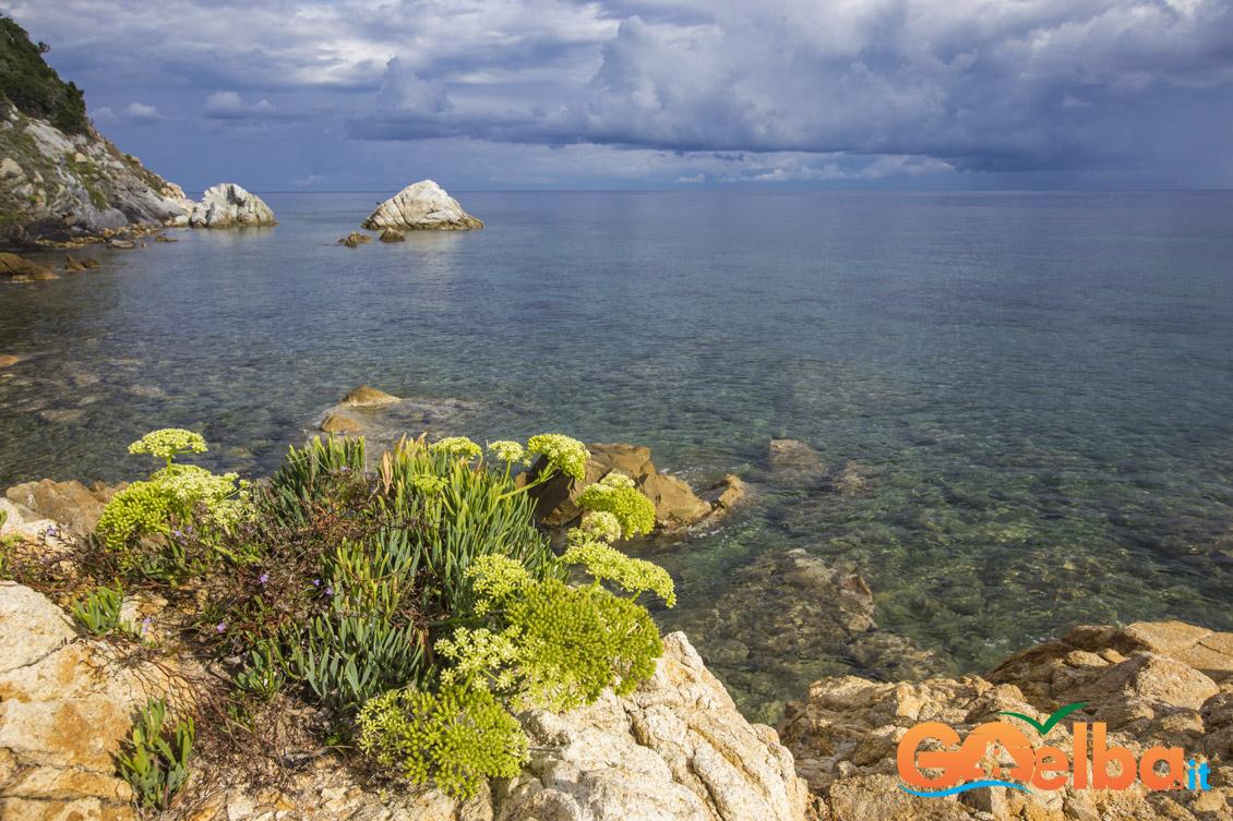 Elba Island, flowers, book, flora, sea, italy, nature