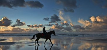 elbaisland, sea, spring, may, holiday, sky, horse, landscape
