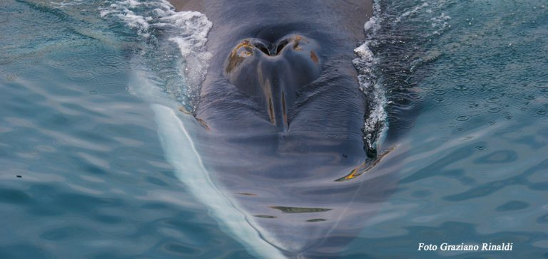 Picture of: My meeting with the whale on Elba Island